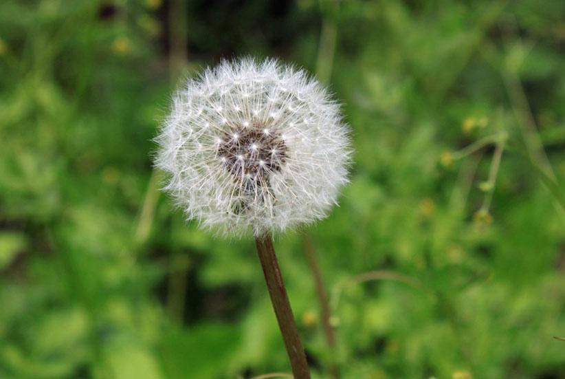 Cómo afectan las alergias a la salud bucodental